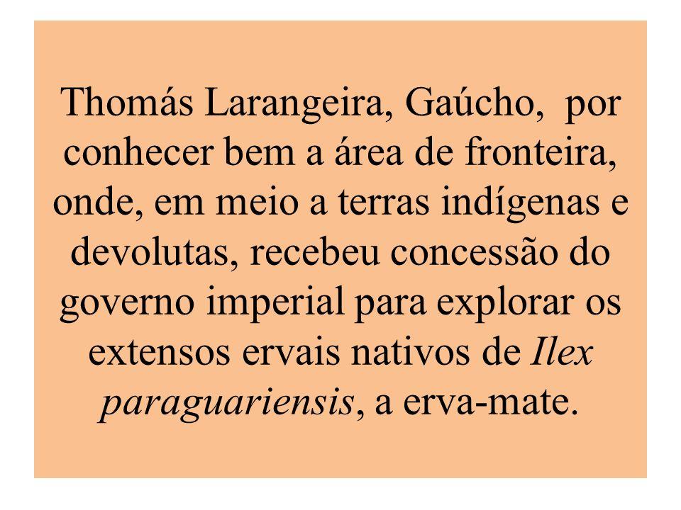 Thomás Larangeira, Gaúcho, por conhecer bem a área de fronteira, onde, em meio a terras indígenas e devolutas, recebeu concessão do governo imperial para explorar os extensos ervais nativos de Ilex paraguariensis, a erva-mate.