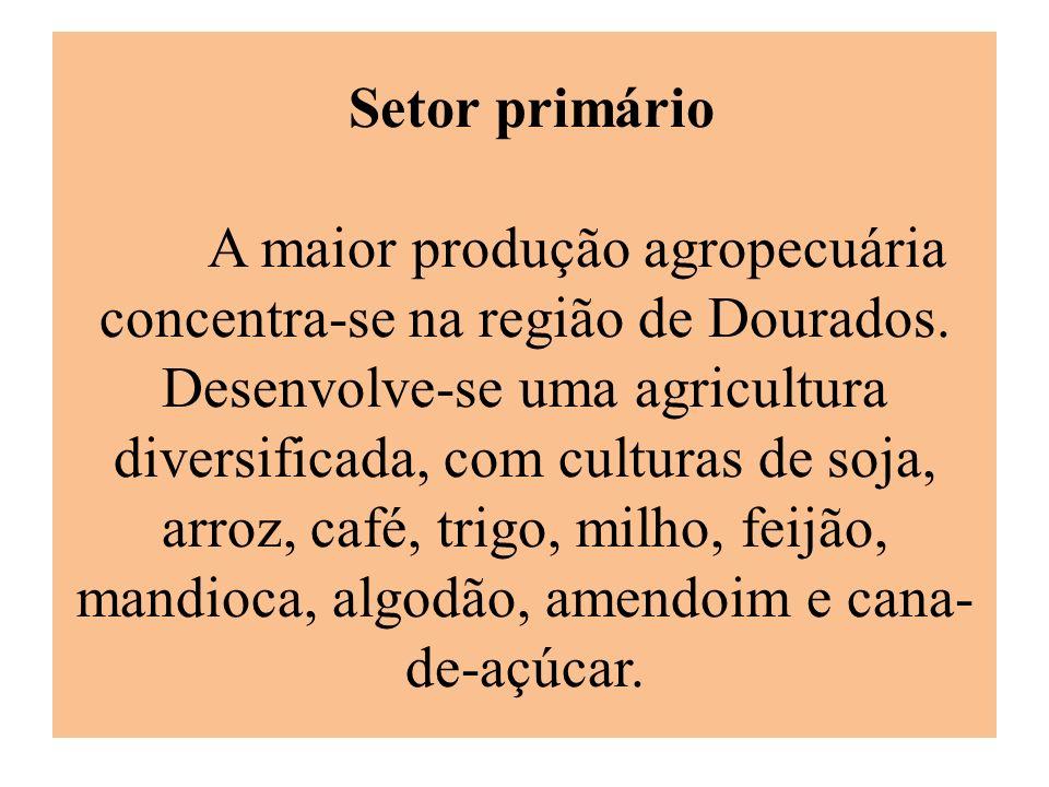 Setor primário A maior produção agropecuária concentra-se na região de Dourados.