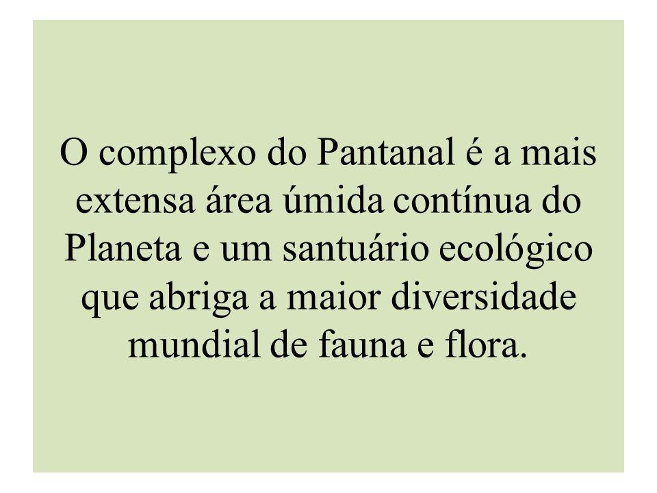 O complexo do Pantanal é a mais extensa área úmida contínua do Planeta e um santuário ecológico que abriga a maior diversidade mundial de fauna e flora.