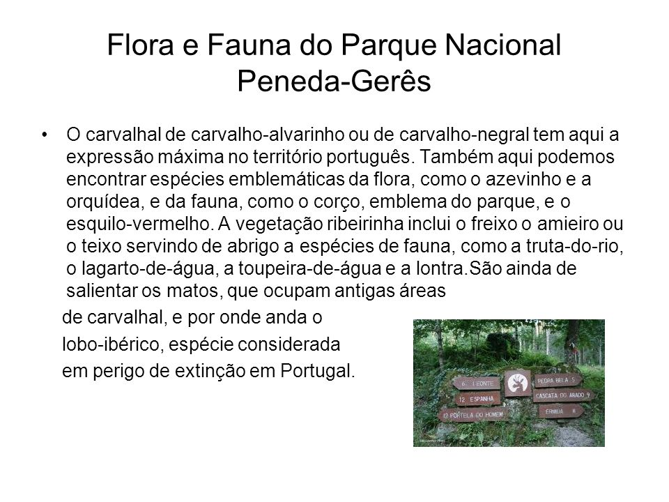 Flora e Fauna do Parque Nacional Peneda-Gerês