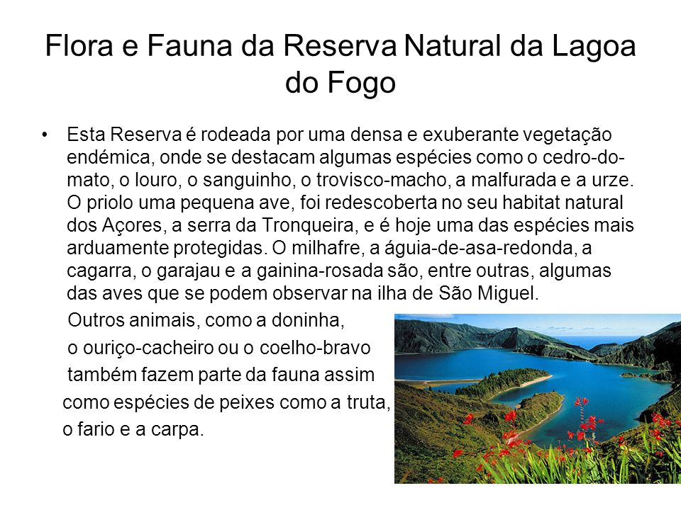 Flora e Fauna da Reserva Natural da Lagoa do Fogo
