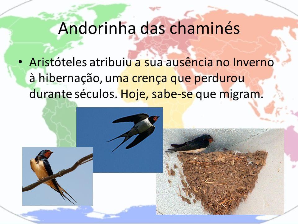 Andorinha das chaminés