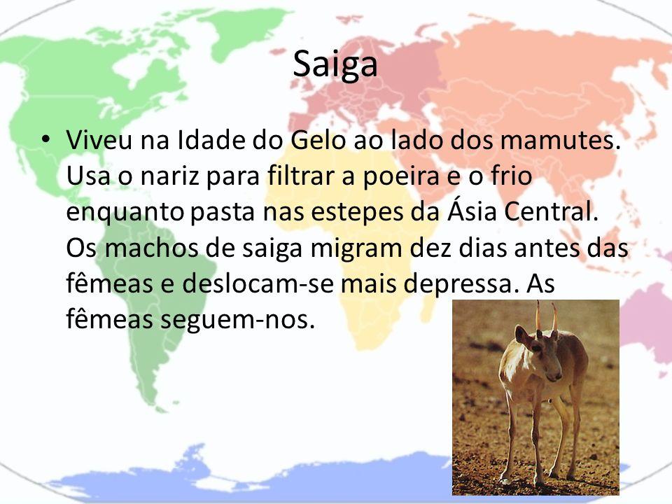 Saiga