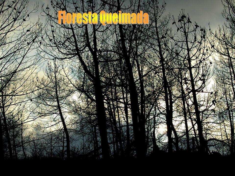 Floresta Queimada Floresta Quaimada - m