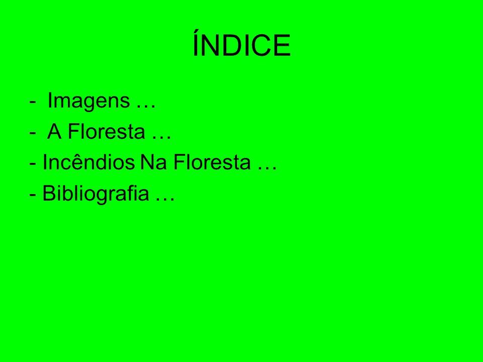 ÍNDICE Imagens … A Floresta … - Incêndios Na Floresta …