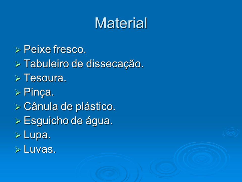 Material Peixe fresco. Tabuleiro de dissecação. Tesoura. Pinça.