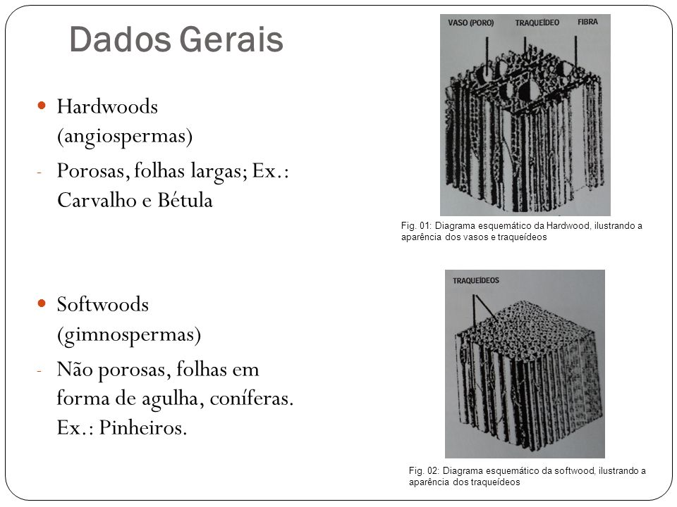 Dados Gerais Hardwoods (angiospermas)