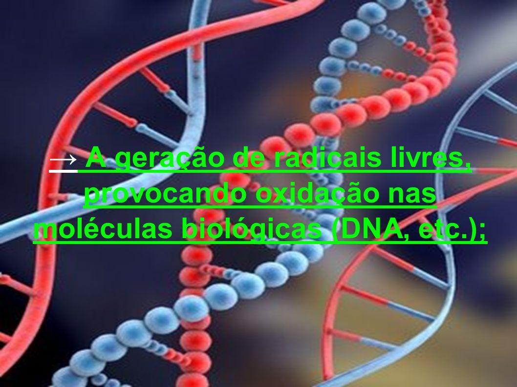 → A geração de radicais livres, provocando oxidação nas moléculas biológicas (DNA, etc.);