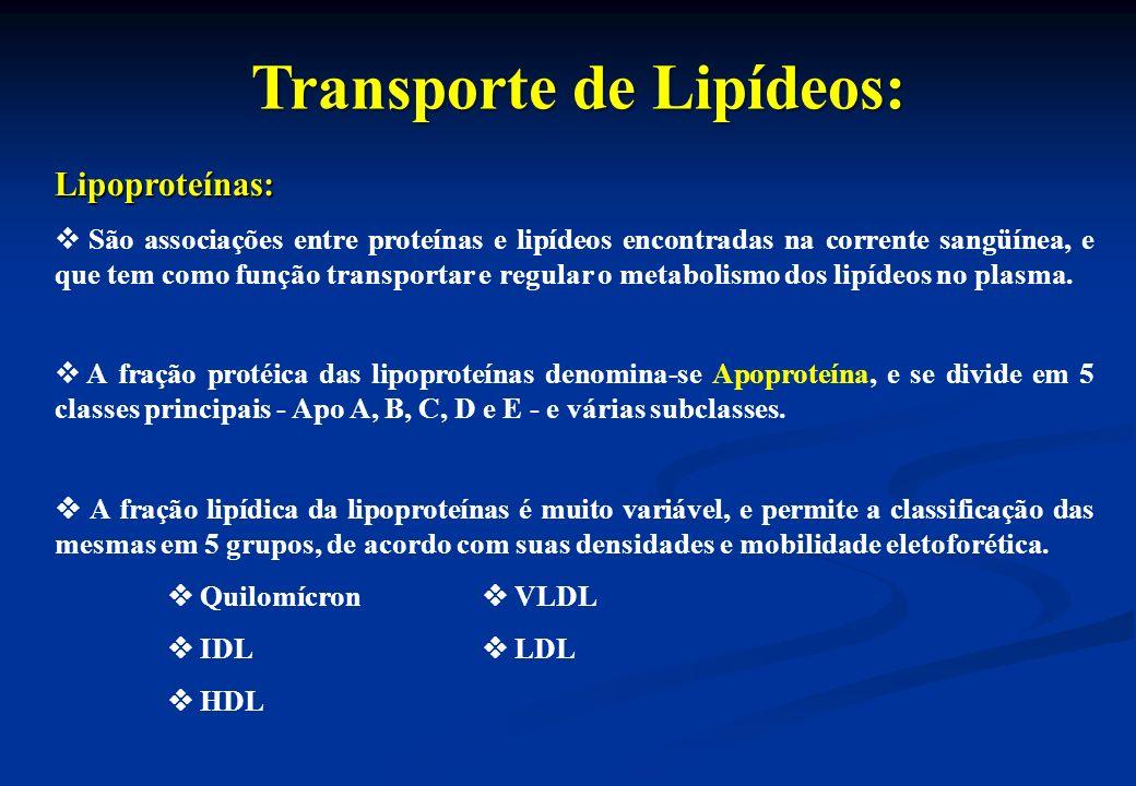 Transporte de Lipídeos: