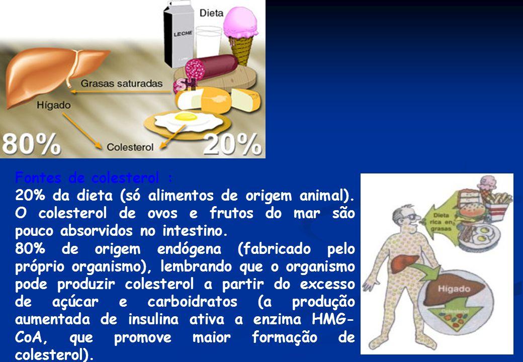 Fontes de colesterol : 20% da dieta (só alimentos de origem animal). O colesterol de ovos e frutos do mar são pouco absorvidos no intestino.