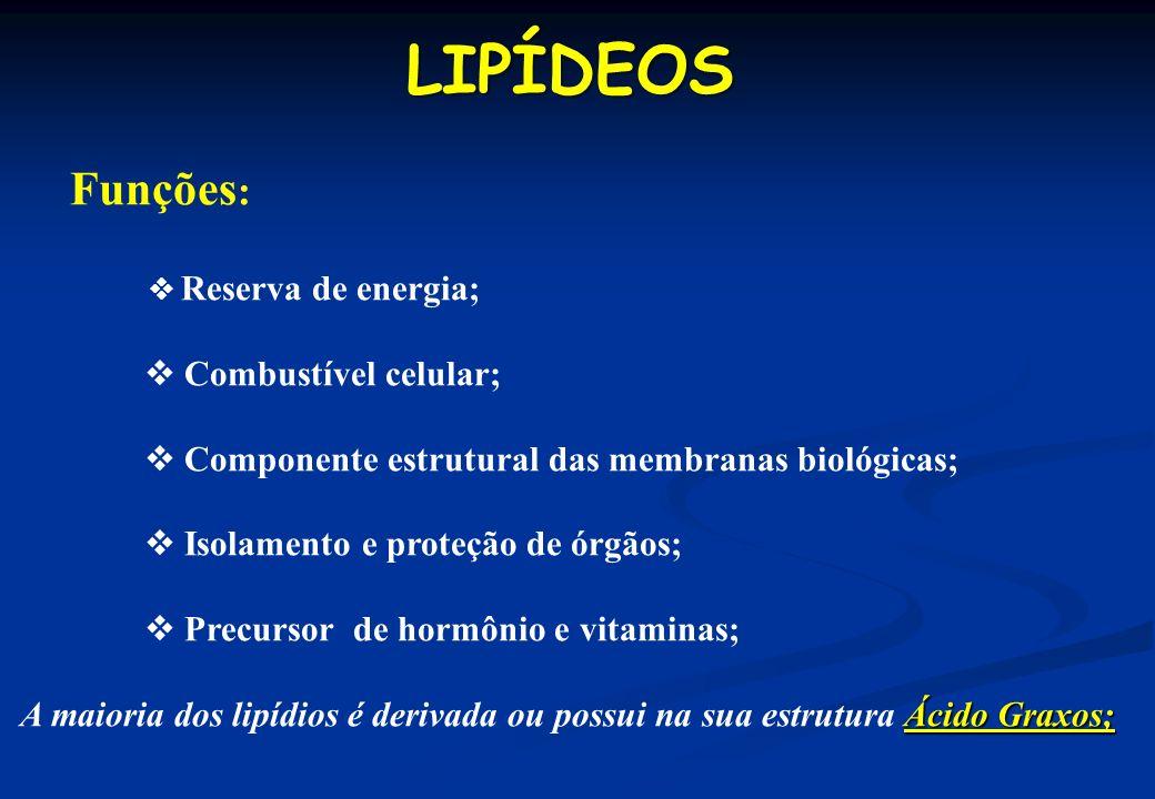 LIPÍDEOS Funções:  Combustível celular;
