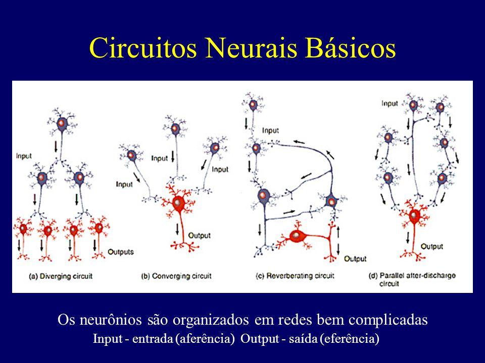 Circuito Neuronal : Profa silvia helena cardoso ppt video online carregar