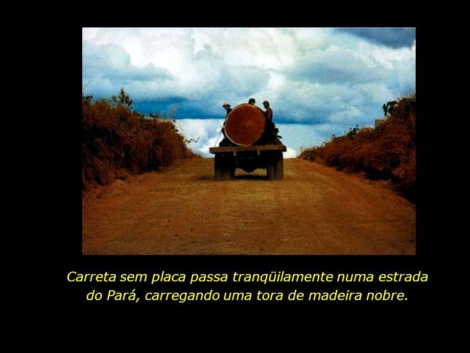 Carreta sem placa passa tranqüilamente numa estrada do Pará, carregando uma tora de madeira nobre.