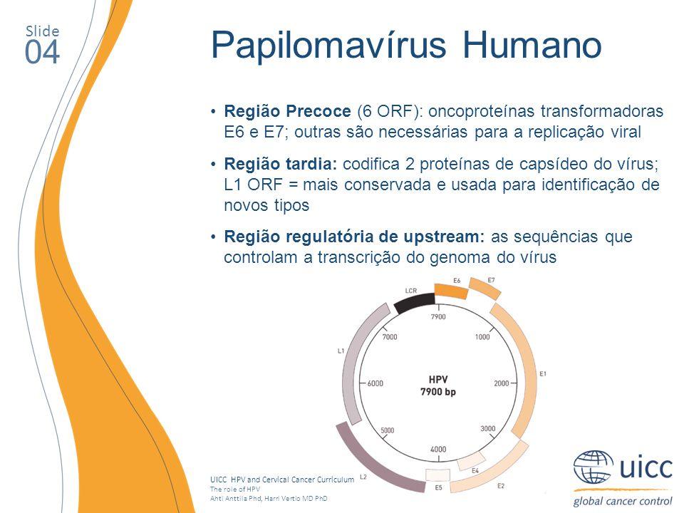 Papilomavírus Humano 04 Slide