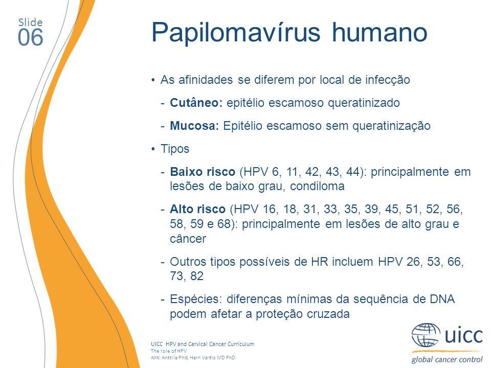 Papilomavírus humano 06 Slide