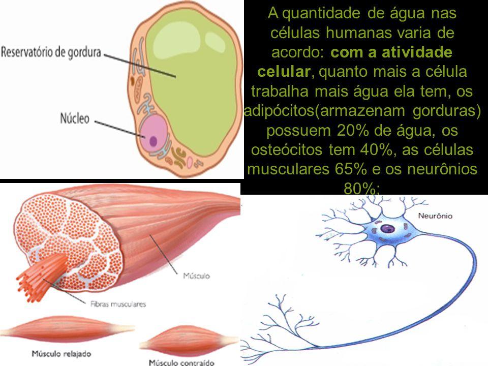Excepcional Células Musculares Humanas Composición - Anatomía de Las ...
