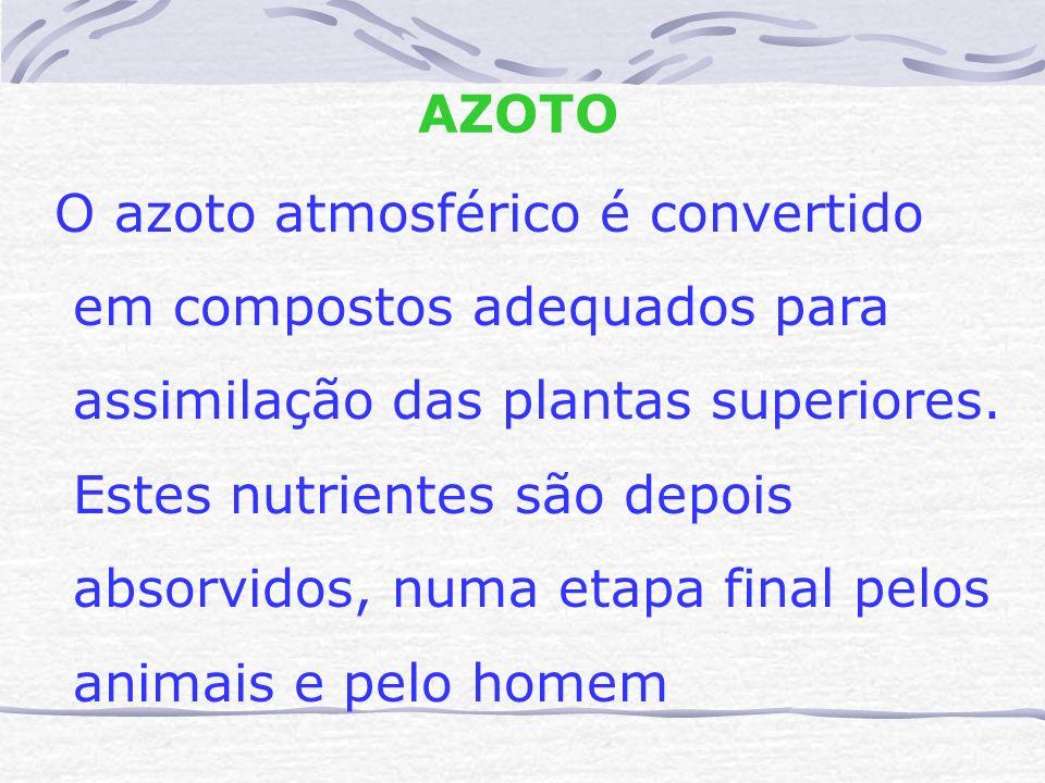 AZOTO O azoto atmosférico é convertido. em compostos adequados para. assimilação das plantas superiores.
