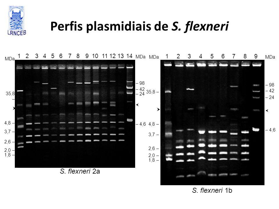 Perfis plasmidiais de S. flexneri