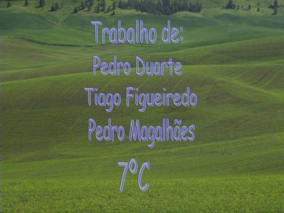 Trabalho de: Pedro Duarte Tiago Figueiredo Pedro Magalhães 7ºC