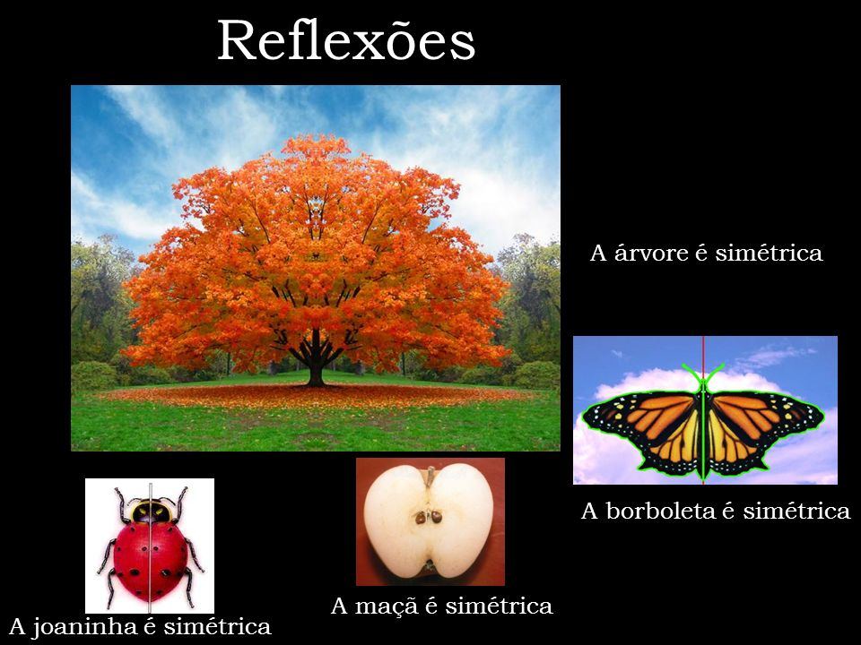 Reflexões A árvore é simétrica A borboleta é simétrica