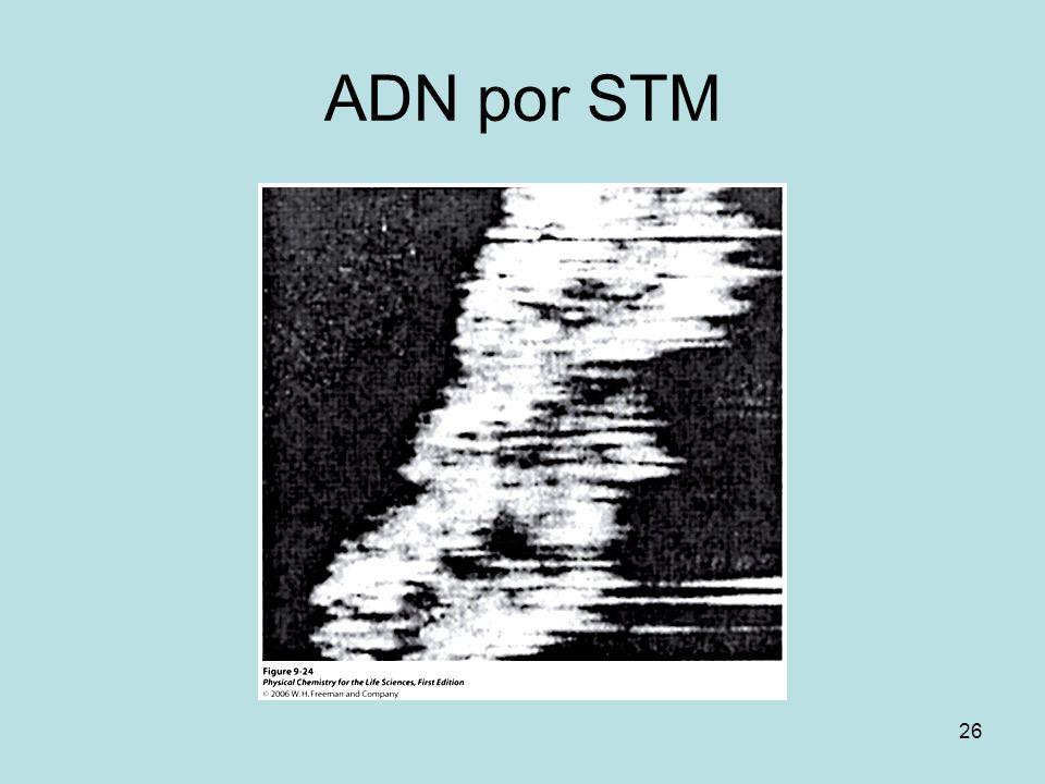 ADN por STM