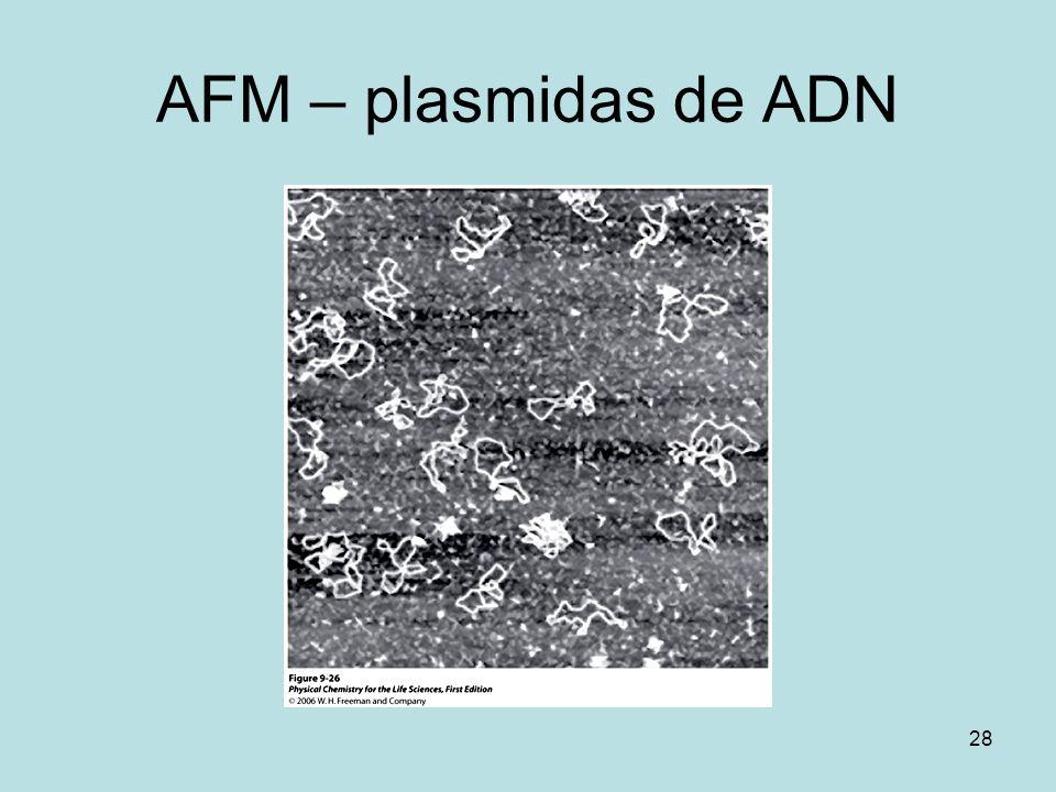 AFM – plasmidas de ADN