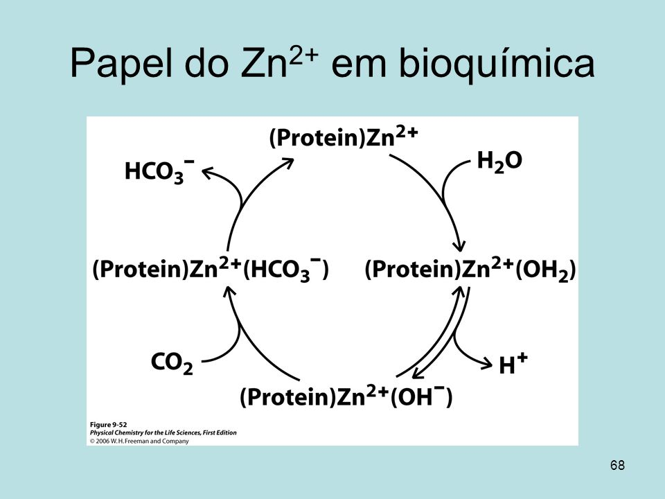 Papel do Zn2+ em bioquímica