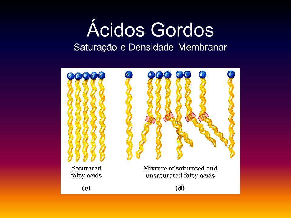 Ácidos Gordos Saturação e Densidade Membranar