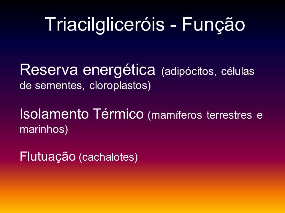 Triacilgliceróis - Função