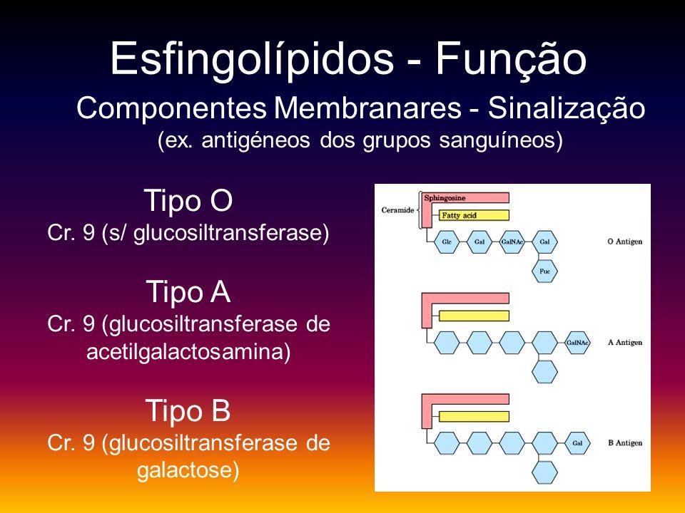 Esfingolípidos - Função