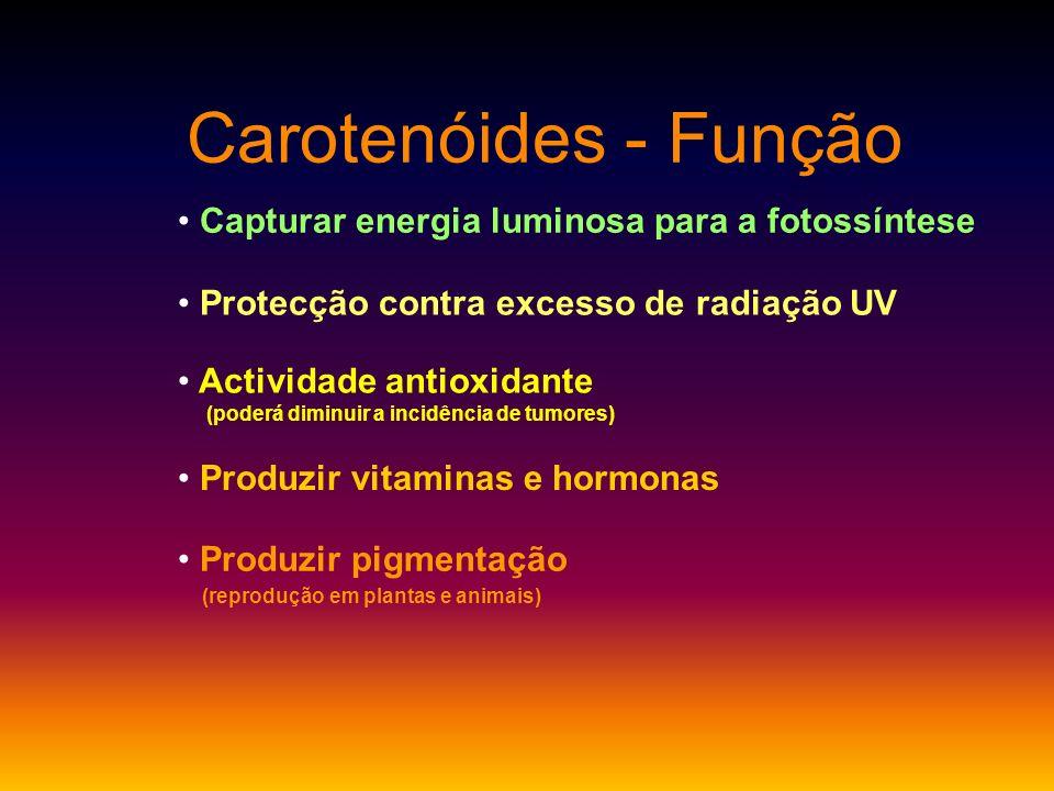 Carotenóides - Função Capturar energia luminosa para a fotossíntese