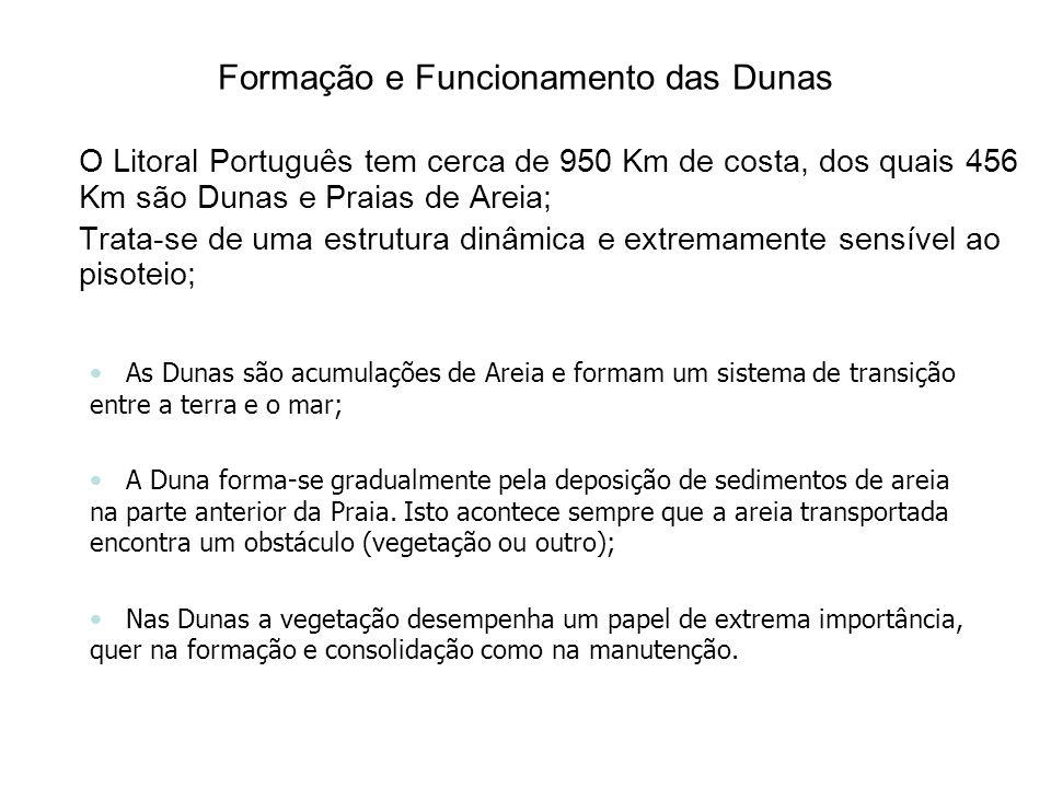 Formação e Funcionamento das Dunas