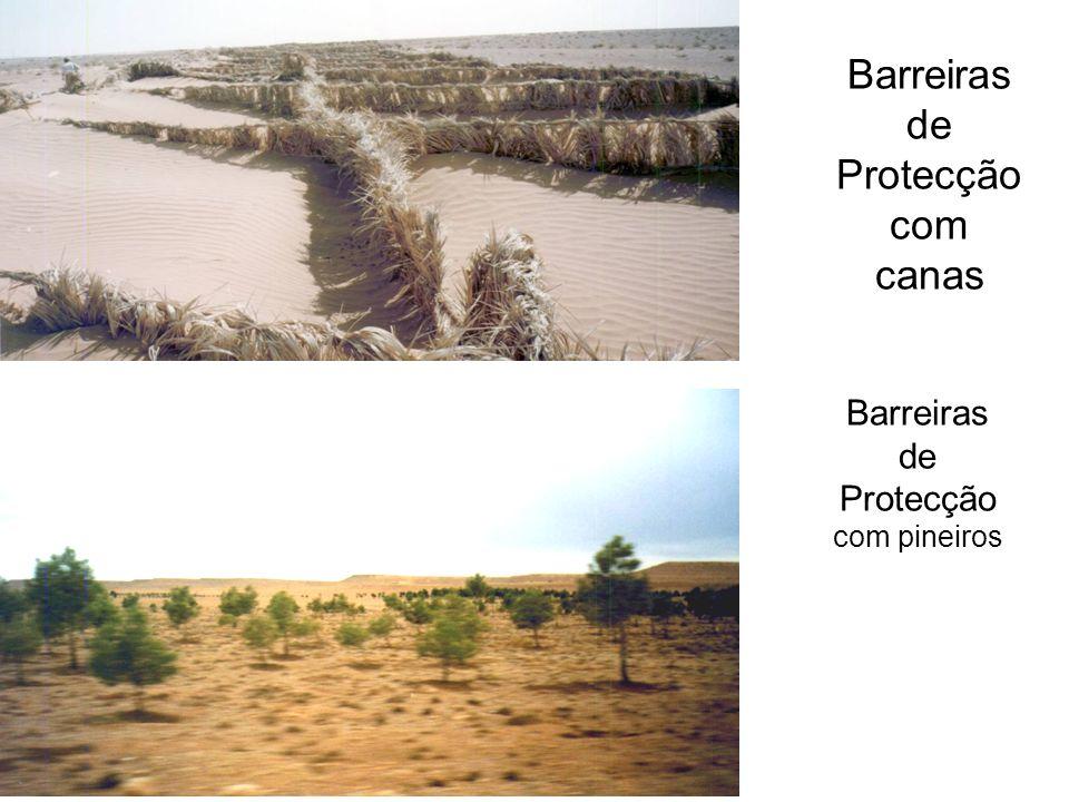 Barreiras de Protecção com canas