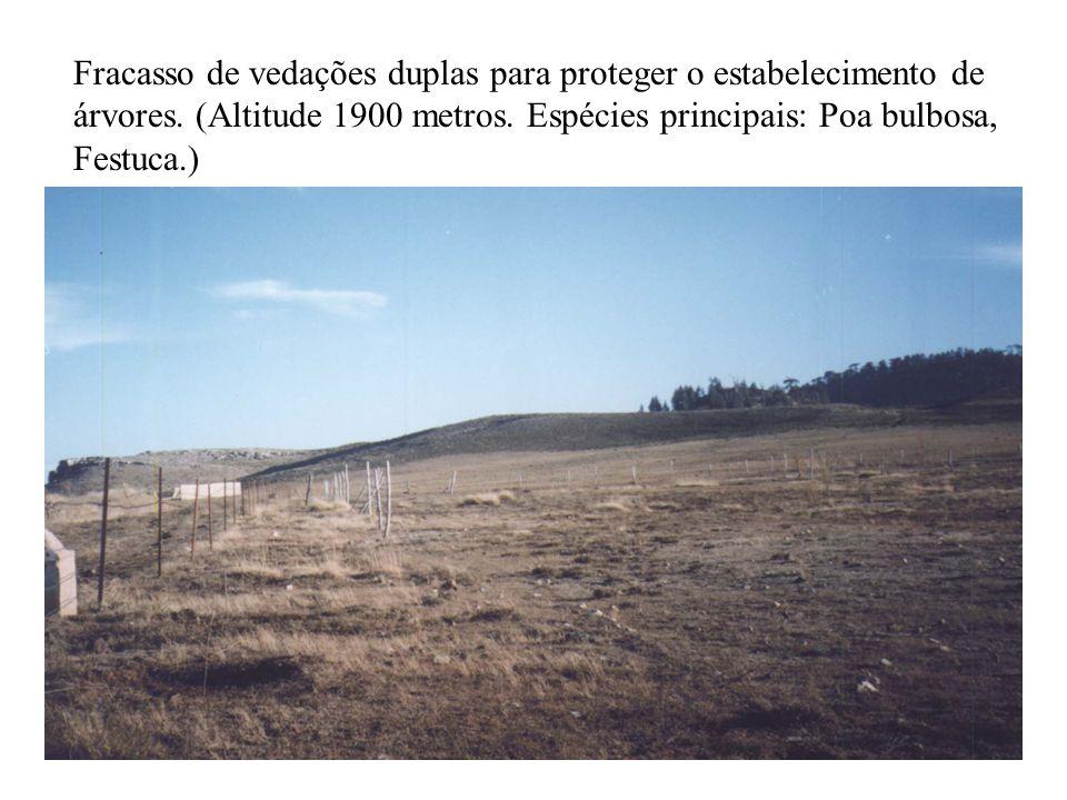 Fracasso de vedações duplas para proteger o estabelecimento de árvores