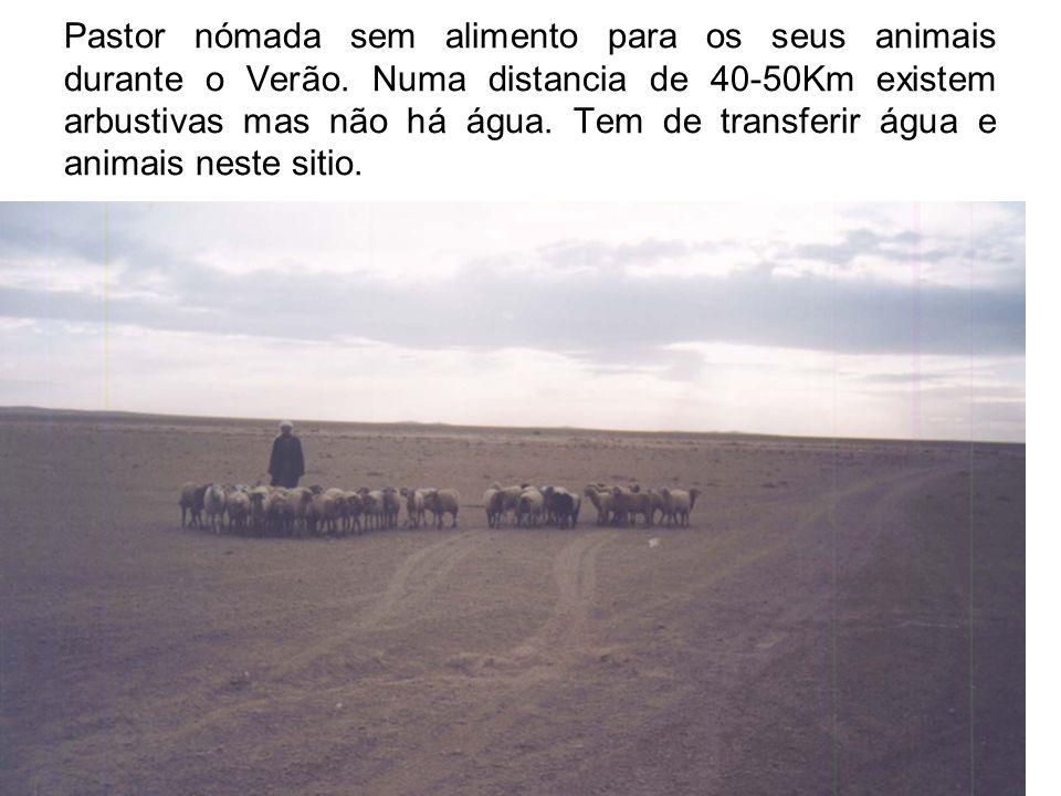 Pastor nómada sem alimento para os seus animais durante o Verão