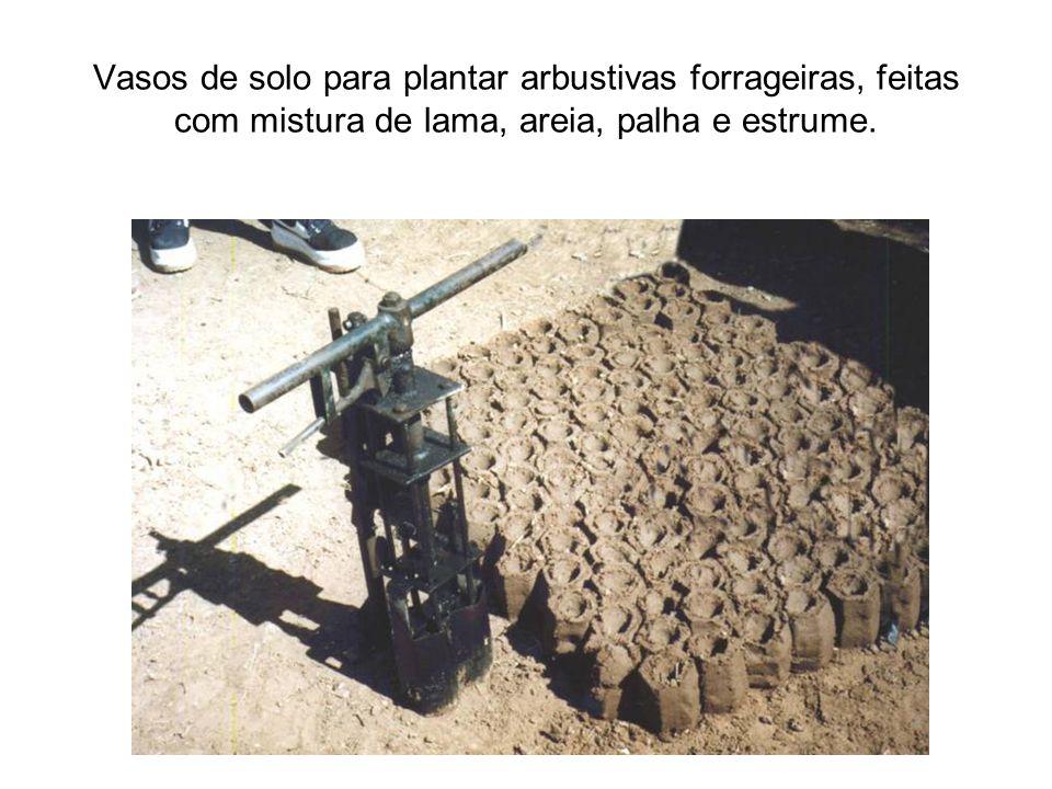 Vasos de solo para plantar arbustivas forrageiras, feitas com mistura de lama, areia, palha e estrume.