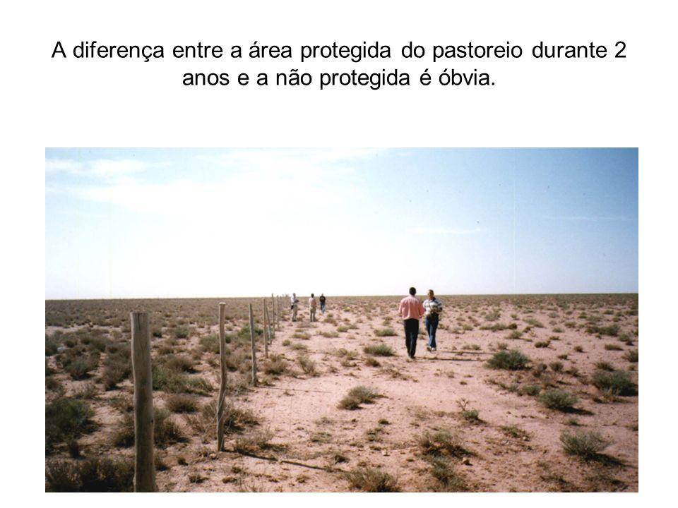 A diferença entre a área protegida do pastoreio durante 2 anos e a não protegida é óbvia.
