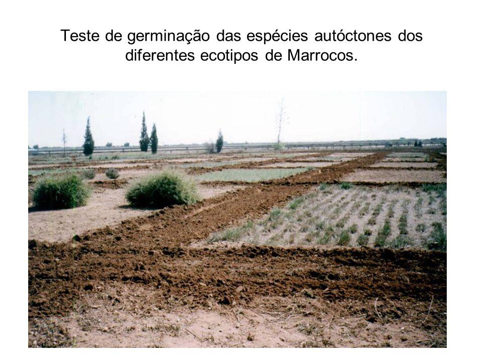 Teste de germinação das espécies autóctones dos diferentes ecotipos de Marrocos.