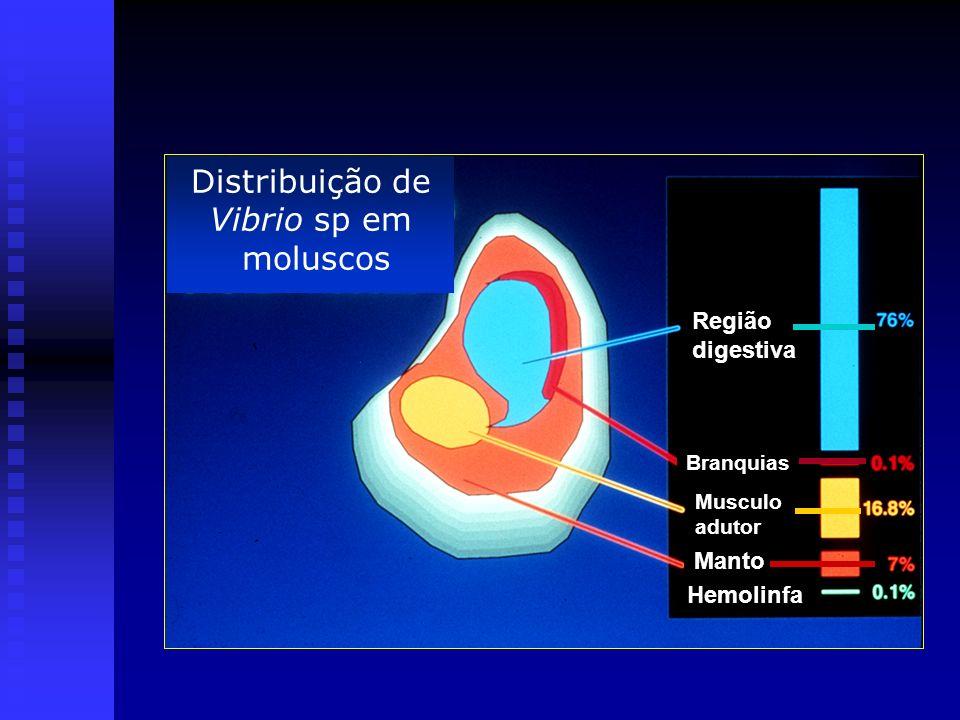 Distribuição de Vibrio sp em moluscos Região digestiva Manto Hemolinfa