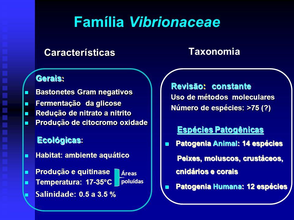 Família Vibrionaceae Características Taxonomia