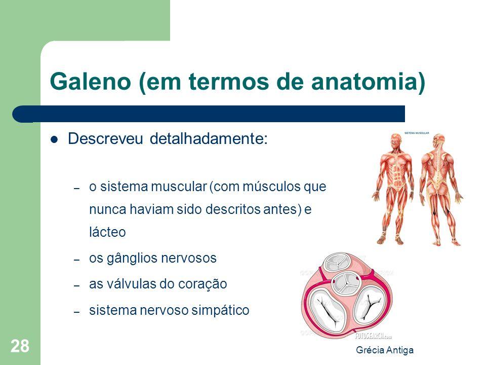 Galeno (em termos de anatomia)