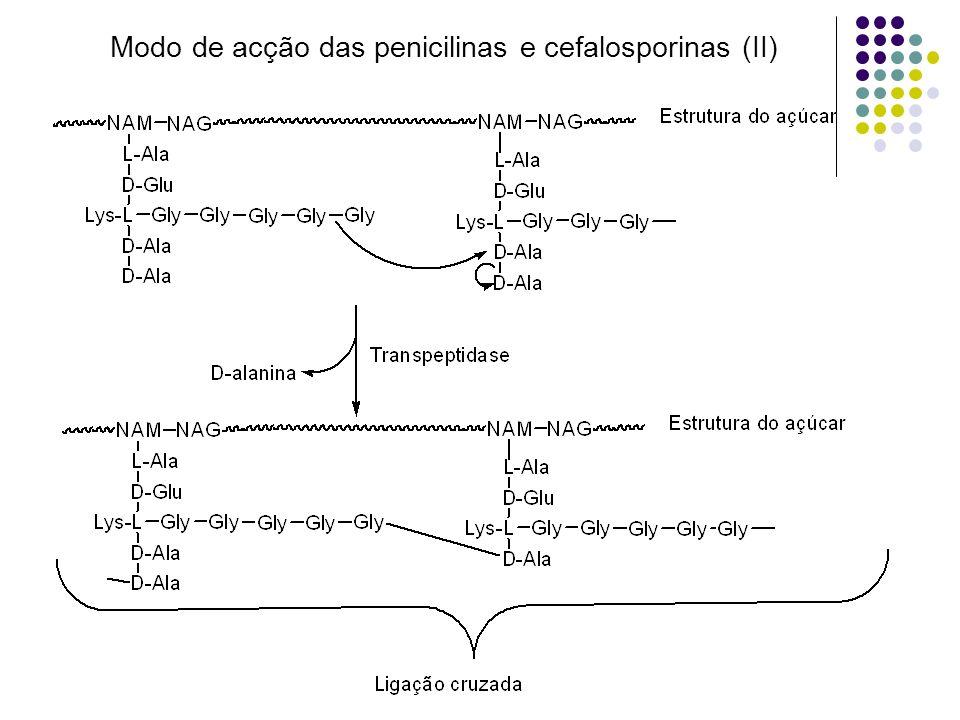 Modo de acção das penicilinas e cefalosporinas (II)