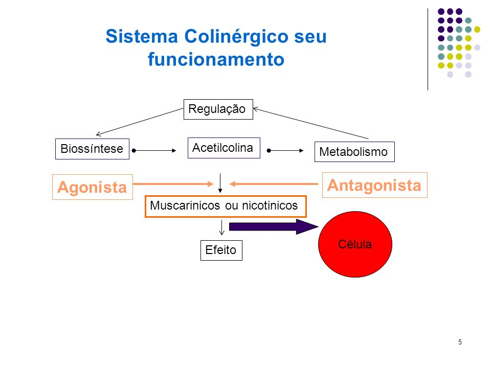 Sistema Colinérgico seu funcionamento