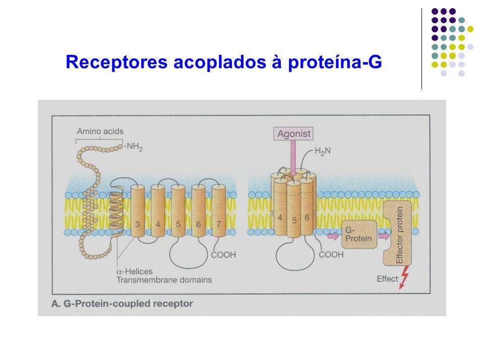 Receptores acoplados à proteína-G