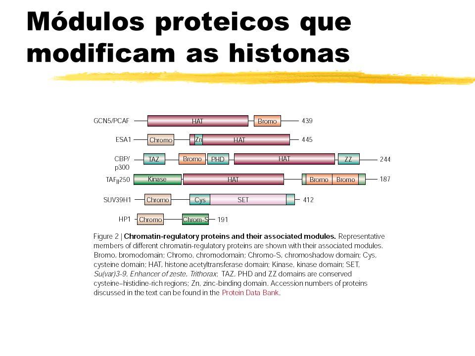 Módulos proteicos que modificam as histonas