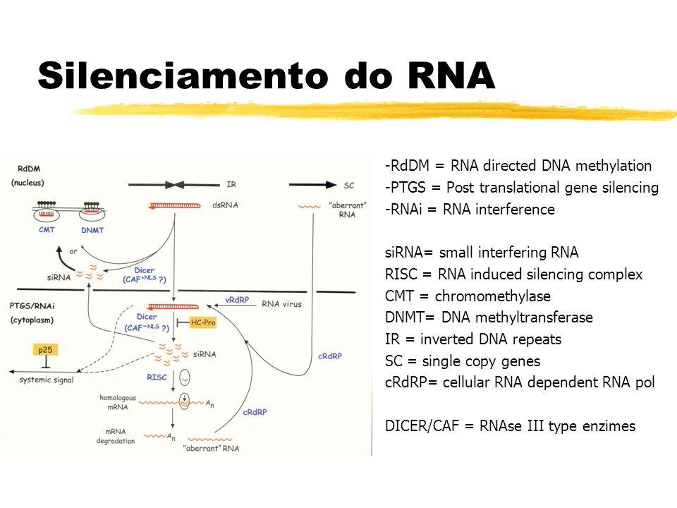 Silenciamento do RNA -RdDM = RNA directed DNA methylation