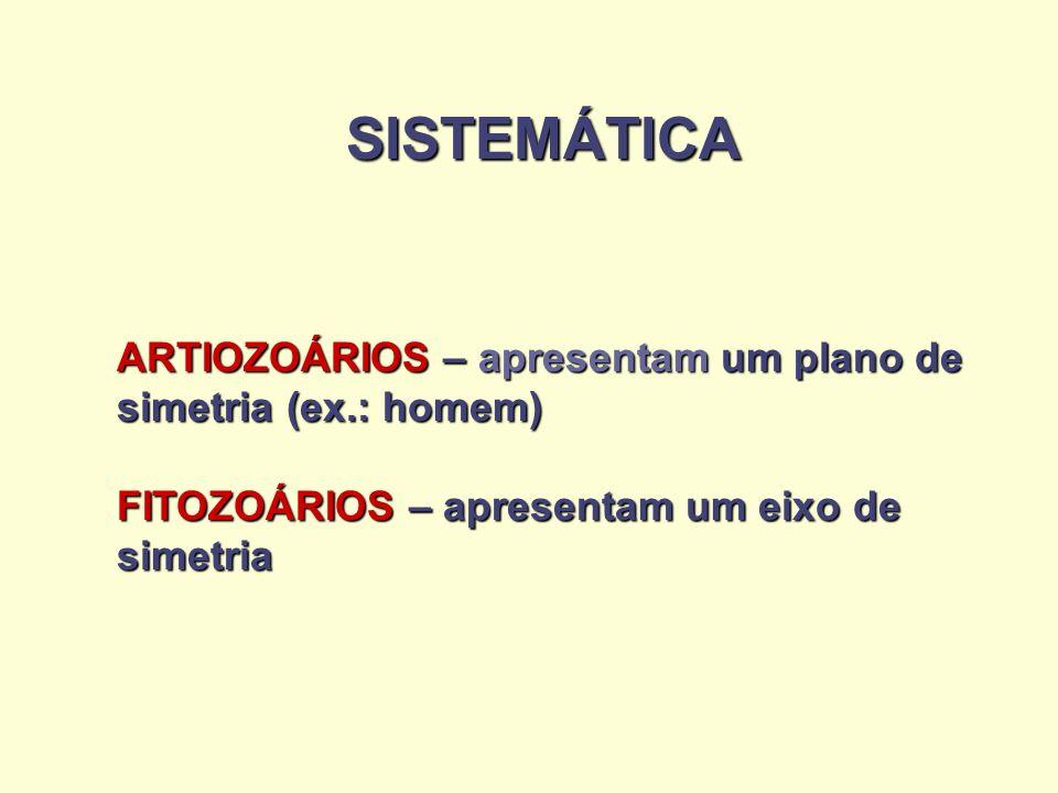 SISTEMÁTICA ARTIOZOÁRIOS – apresentam um plano de simetria (ex.: homem) FITOZOÁRIOS – apresentam um eixo de simetria.