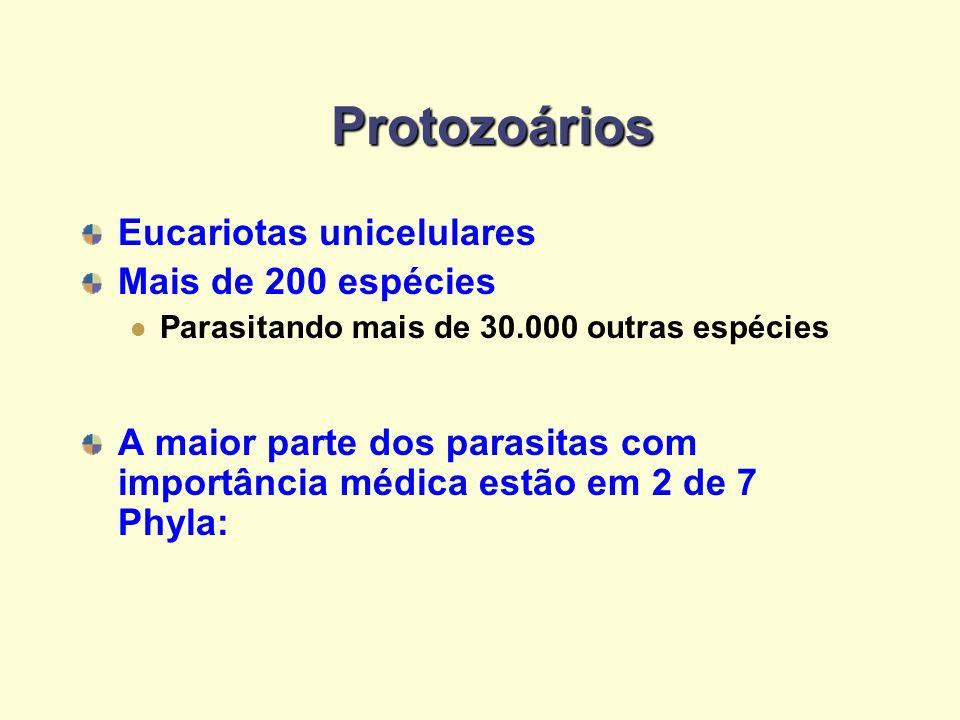 Protozoários Eucariotas unicelulares Mais de 200 espécies