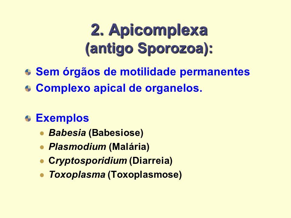 2. Apicomplexa (antigo Sporozoa):