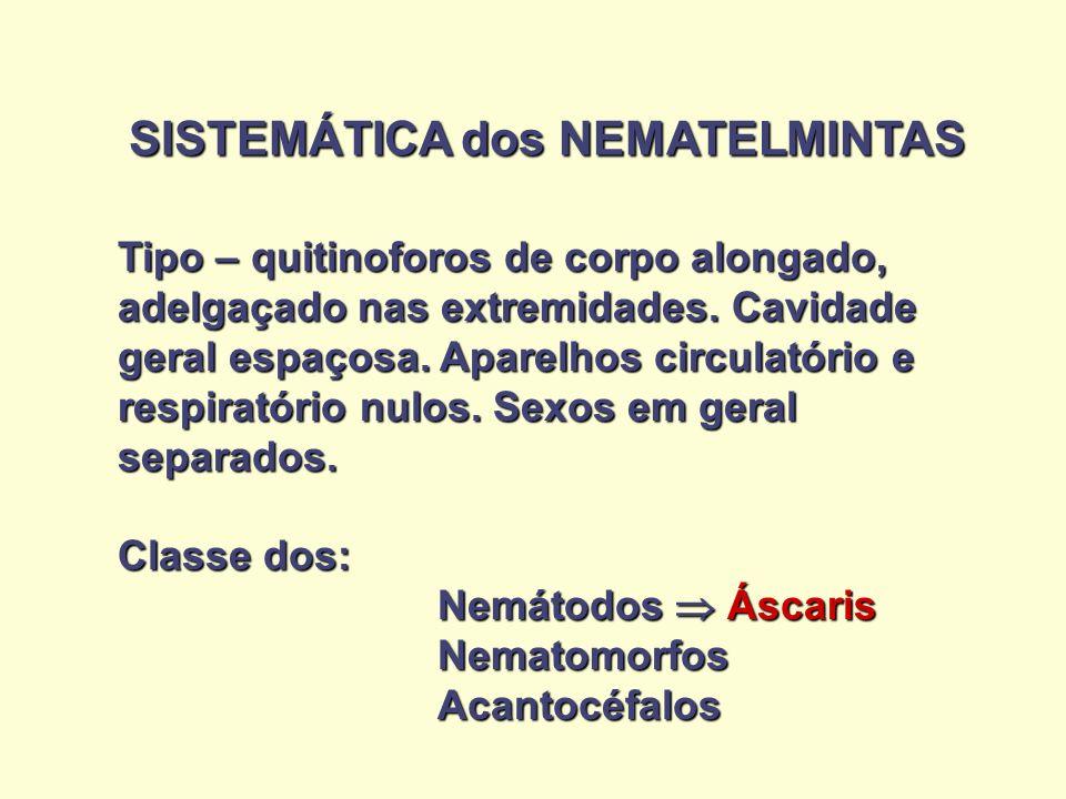 SISTEMÁTICA dos NEMATELMINTAS